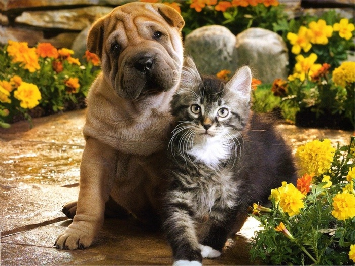 3085196_kittens__puppies_03_05_ccnan_wallpapersuggest_com1024x768 (700x525, 186Kb)