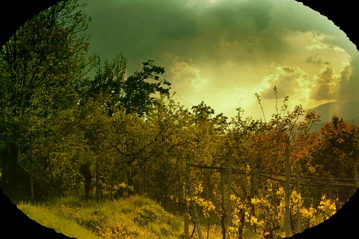 summertime-407250_640 (700x465, 627Kb)