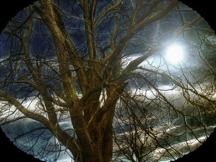 tree-105199_640 (700x524, 815Kb)
