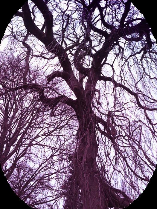 tree-385805_640 (525x700, 973Kb)
