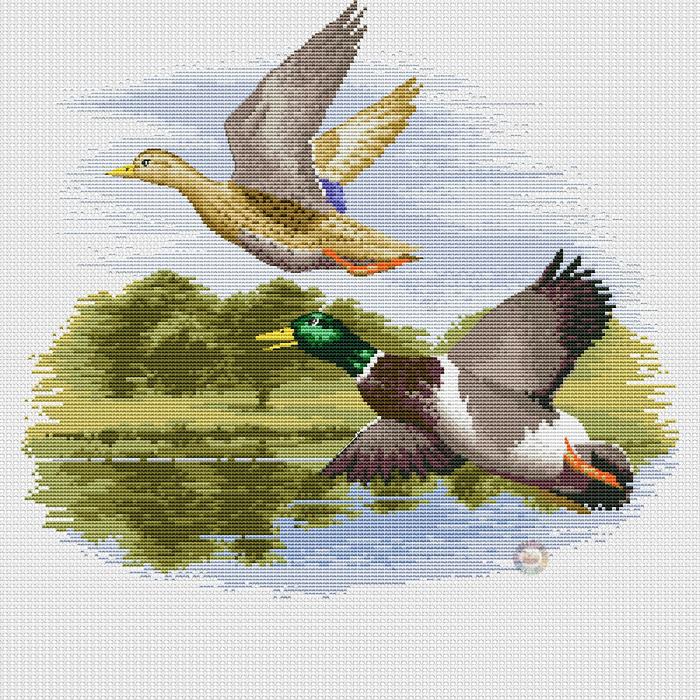 Mallard Ducks in Flight (700x700, 658Kb)