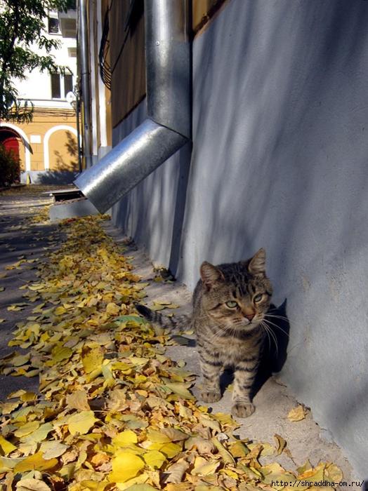 осенний кот (2) (524x700, 329Kb)