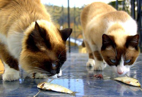 Natural-cat-food-768545 (500x341, 43Kb)