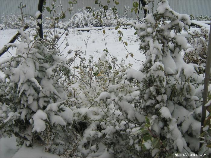 первый снег1 (700x525, 374Kb)