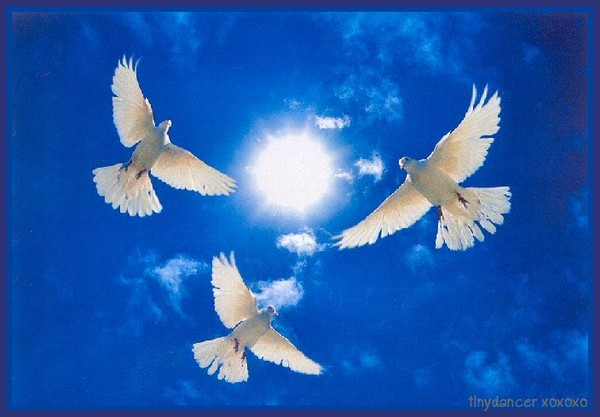 PeaceDoves (600x417, 56Kb)