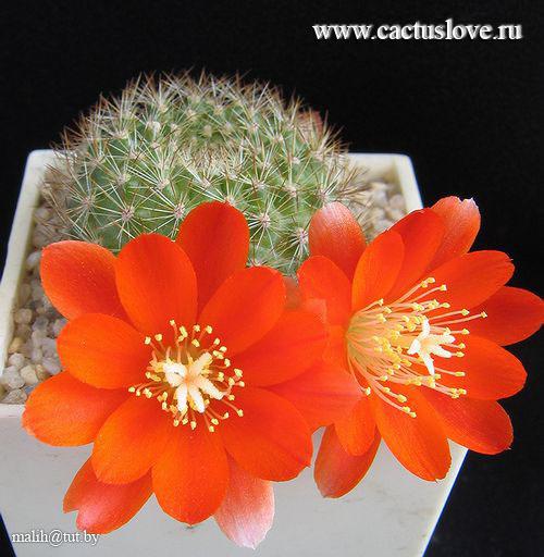 http://img0.liveinternet.ru/images/attach/c/0//42/526/42526172_big_2872.jpg
