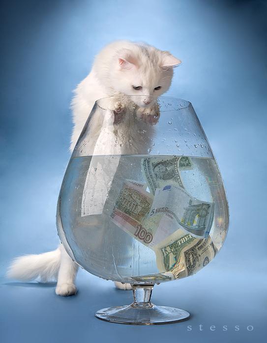 Кошка, деньги, вода