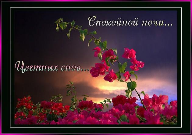 http://img0.liveinternet.ru/images/attach/c/0//42/588/42588853_21024976_4879653_Spokoynoynochi.jpg