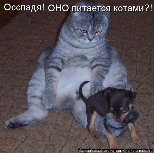 http://img0.liveinternet.ru/images/attach/c/0//42/685/42685293_radionetplus_ru_zabavno_1002.jpg
