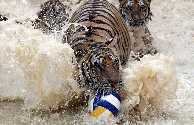 Храм тигра в Таиланде