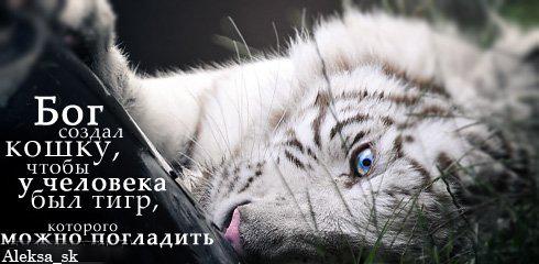 http://img0.liveinternet.ru/images/attach/c/0//43/196/43196660_1241011870_21.jpg
