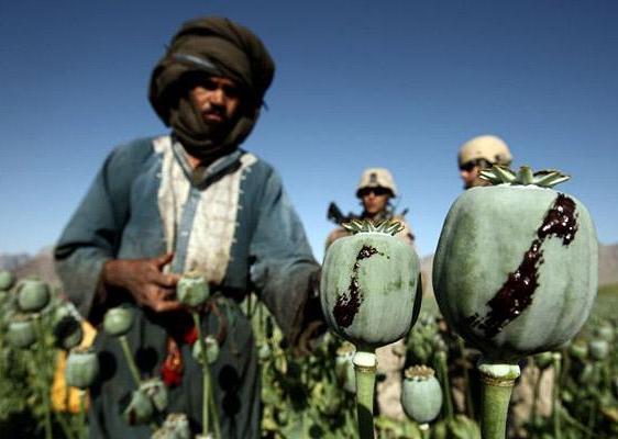 Афганистан: опийный мак