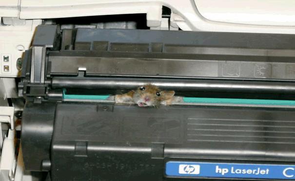 мышку заело