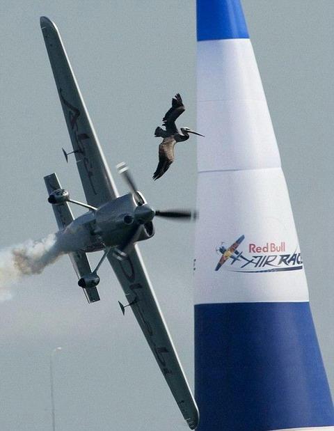 пеликан и самолет 1