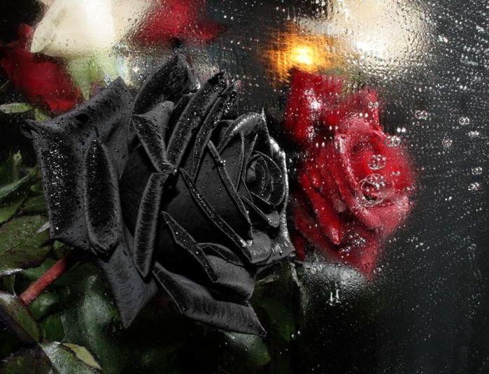 http://img0.liveinternet.ru/images/attach/c/0//43/931/43931244_1242580739_4713.jpg