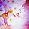 http://img0.liveinternet.ru/images/attach/c/0//44/536/44536964_1243829957_pastimeart_sakura_1.png