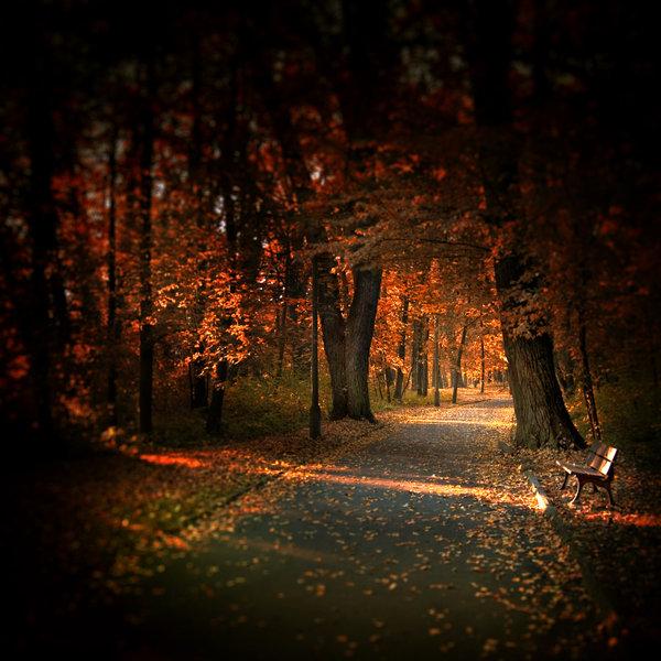 Autumn_light_by_WiciaQ (600x600, 100Kb)