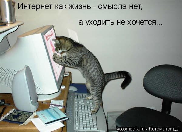автор фотографии: