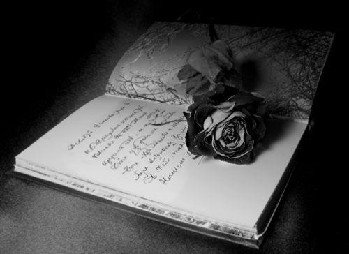 роза и книга (500x364, 23Kb)