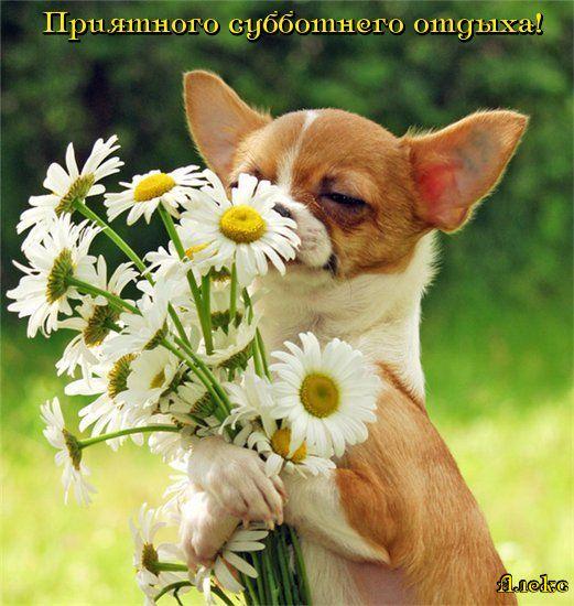 http://img0.liveinternet.ru/images/attach/c/0//45/72/45072748_5sauuur4scg4315fflvcgb1gt51.jpg