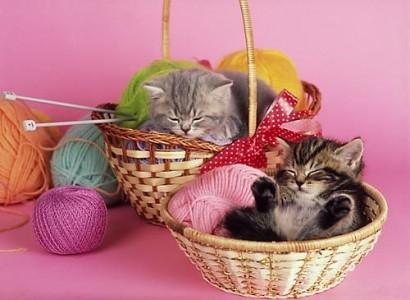 7 кошек каждой женщины