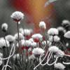 http://img0.liveinternet.ru/images/attach/c/0//46/501/46501156_nat14.jpg