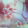 http://img0.liveinternet.ru/images/attach/c/0//46/501/46501208_nat20.jpg