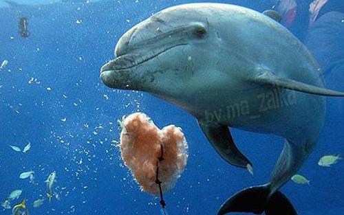 Женщина-пловец из Новой Зеландии была спасена в моря после того, как Moko дельфин отказался позволить ей вернуться на берег.