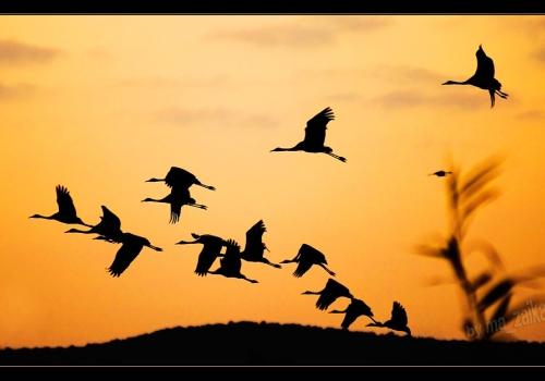 Птицы вольной стая