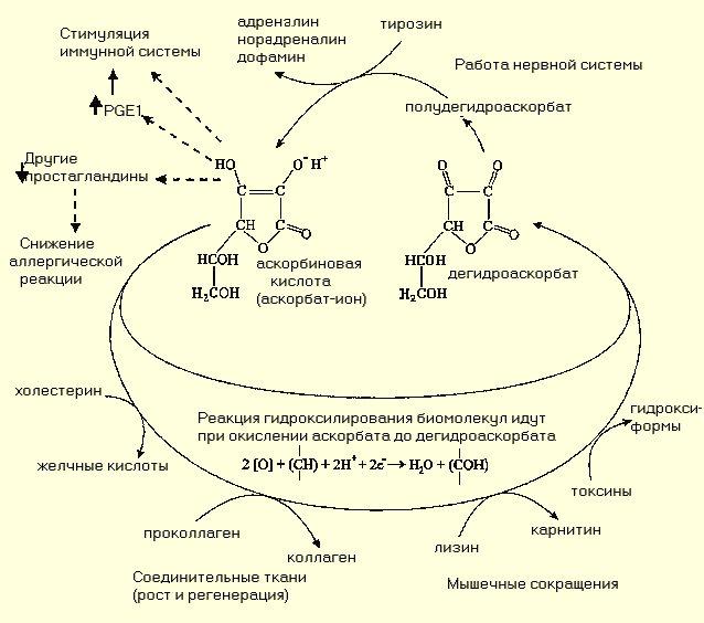 Витамины и микроэлементы.