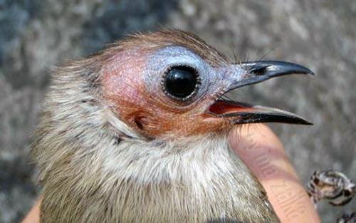 Птица была найдена в районе редких лесов на известняковых породах
