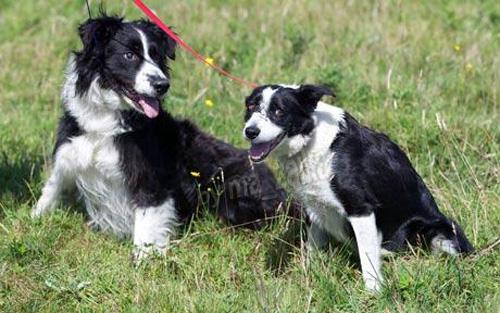 Бонни и Клайд были обнаружены неразлучными три недели назад