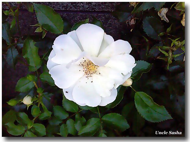 Foto-0031-juli-09 (623x467, 86Kb)