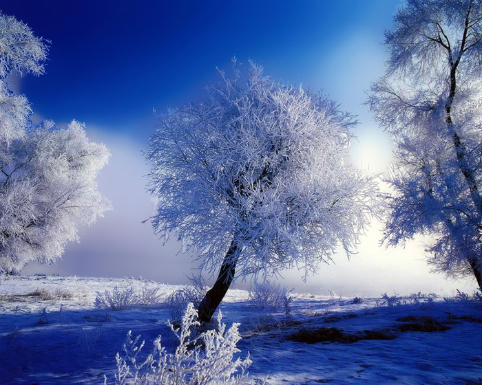http://img0.liveinternet.ru/images/attach/c/0//47/211/47211481_1249589781_8371726_winter11280.jpg