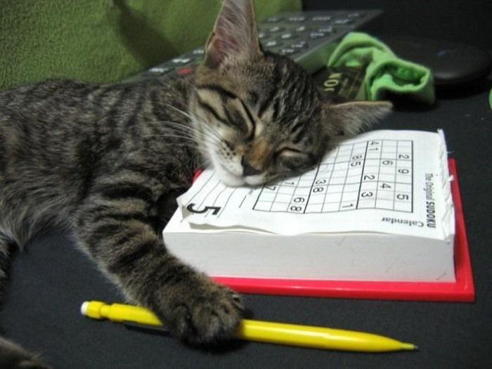 Дневник Кота!!!)))