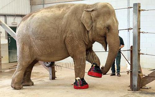 Слон в тапочках