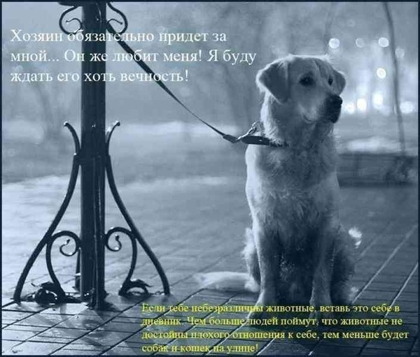 http://img0.liveinternet.ru/images/attach/c/0//47/407/47407188_1.jpg