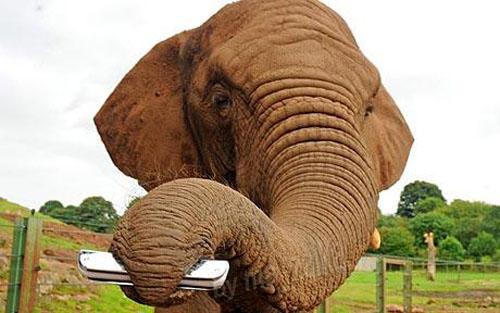 Слоненок с гармошкой