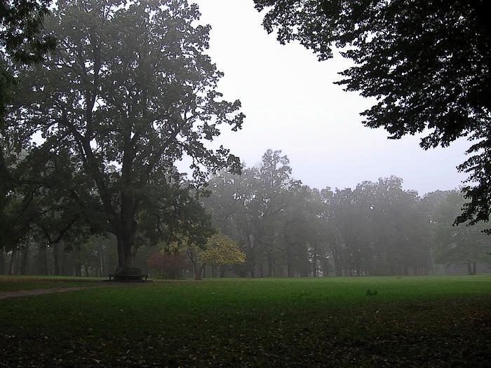 Умань. Софиевский парк. 300-летний дуб
