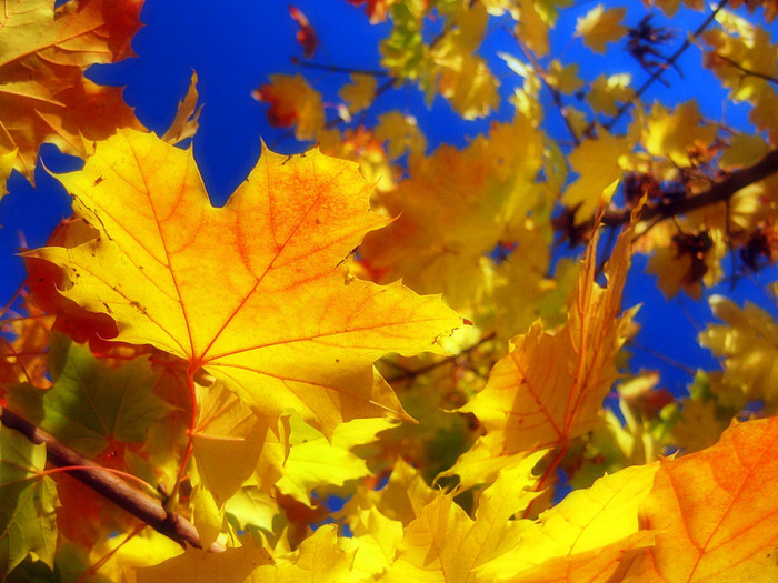 Autumn_13 (700x525, 158Kb)