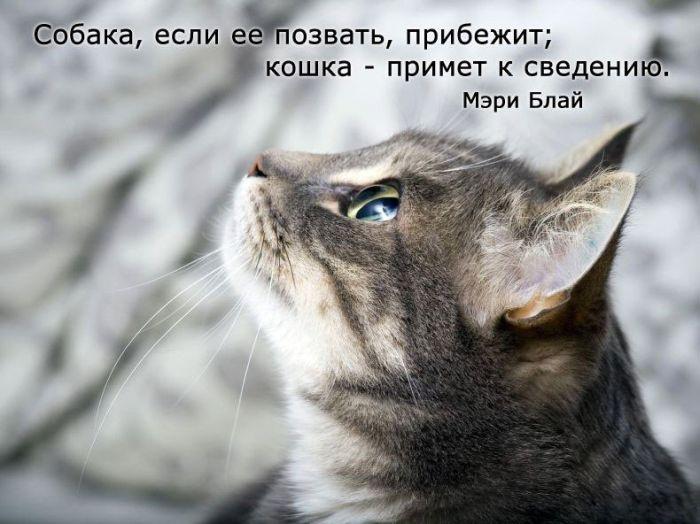 цитаты о кошках