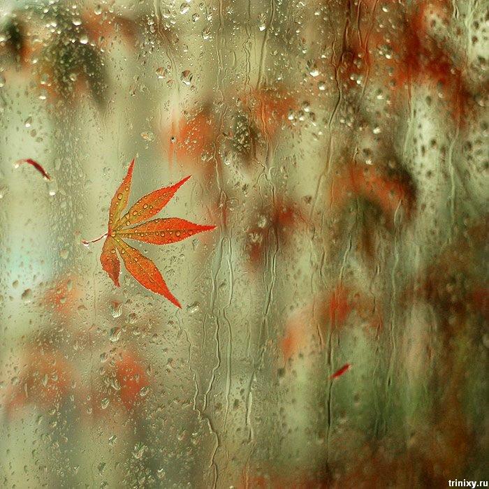 41556786_32946482_rain_18 (700x700, 120Kb)