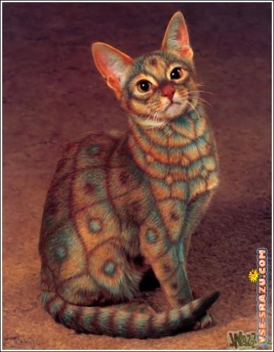 Коты цветные картинки