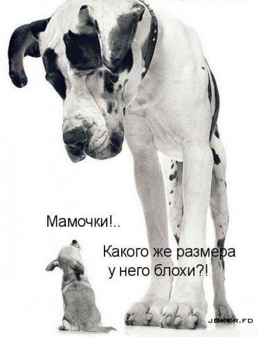 http://img0.liveinternet.ru/images/attach/c/0//48/419/48419628_1252248955_blohi.jpg