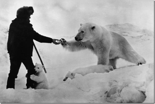 медведица с медвежатами берет банку сгущенки из рук пограничника
