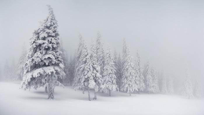 Картинки по запросу белые равнины зима