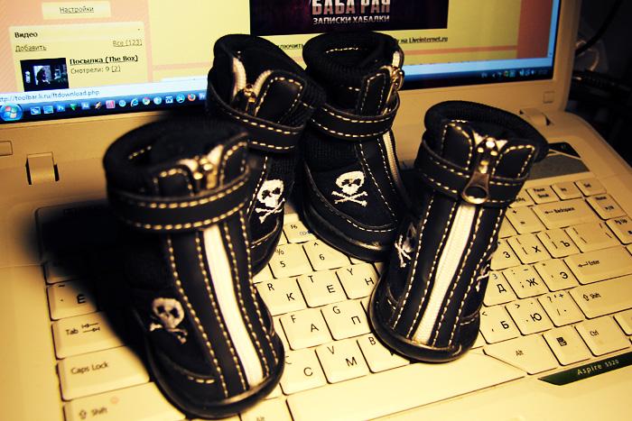 Ботинки для таксы