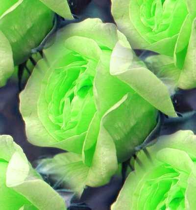 Легенды о розах. Комментарии : Блоги МК