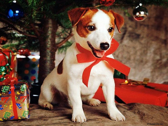 Собака на Новый год