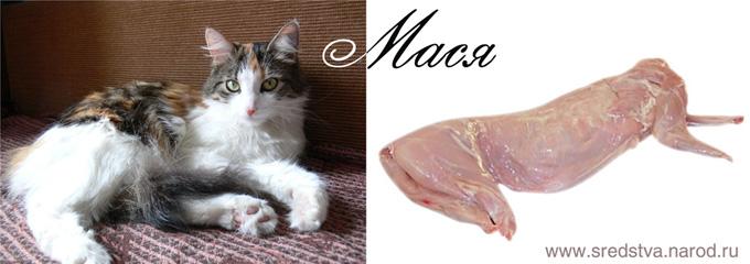 sredstva, вячеслав павлов, кошка, кошачье мясо, мясо кошки, мася, кошкино мясо, мясо кролика, готовим кошку, готовим кролика, приготовить кролика, жаркое из кролика, жаркое из кошки, как правильно готовить кошку